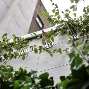 Why planting a 'green wall' could improve your wealth!