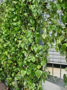Curtain green Wall Close Up