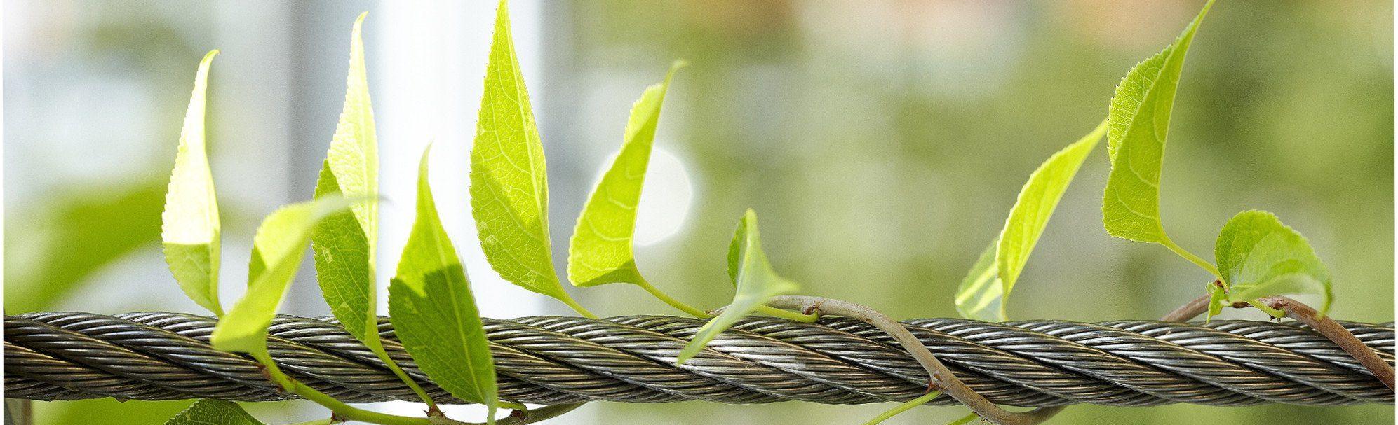 Green Wall Sustainability