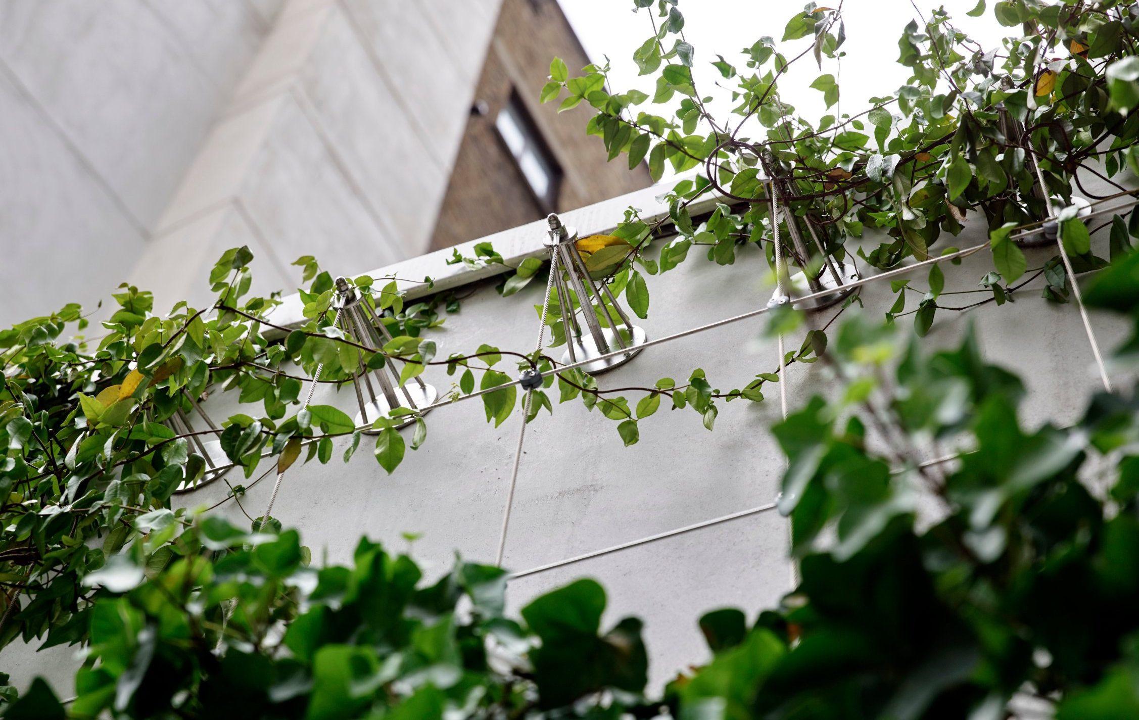 Jakob Green Wall Project Drapers Garden