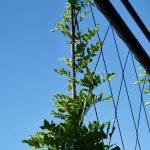 Plant growing on Jakob Webnet Green Wall