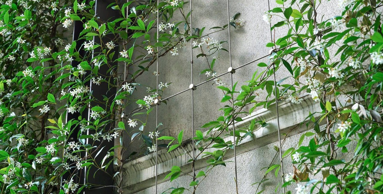 Jakob Stainless Steel Trellis Green Wall From MMA Architectural Systems