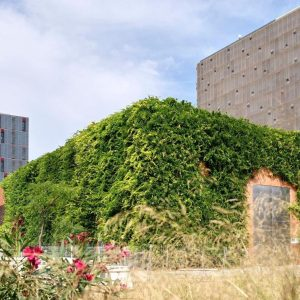 International Green Wall Day, 15th February 2021