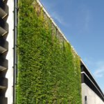 Sihl City Greenwall