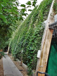 St. Dominics Green Wall Planted