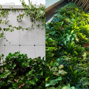 Trellis Green Walls Vs Pocket Based Green Walls