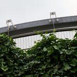 Green Wall with Jakob Webnet